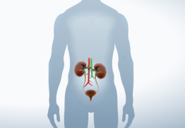 urologia tumb